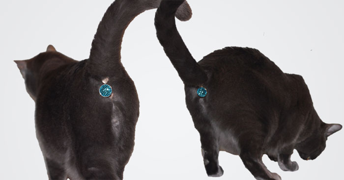 You Can Now Buy A Jewel To Cover Your Cat S Butthole